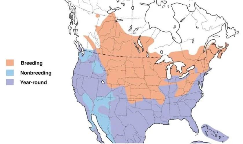 pied billed grebe range map