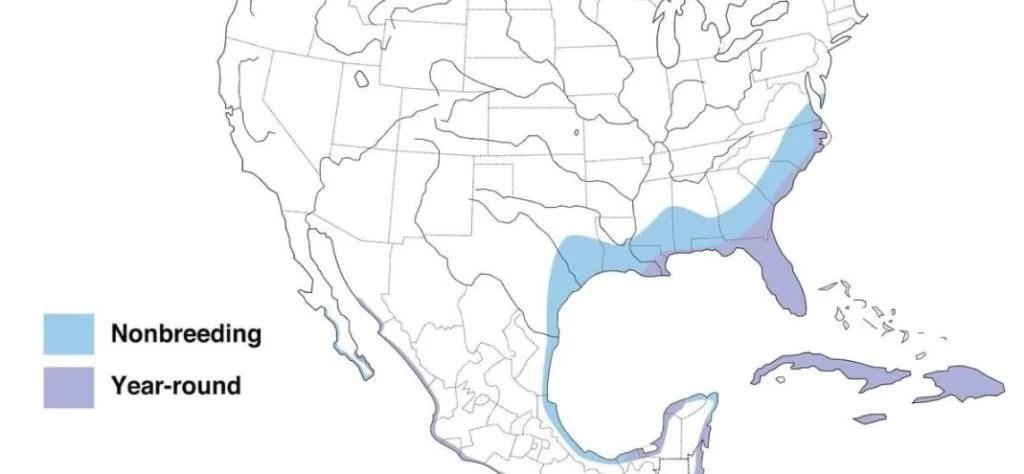 white ibis range map