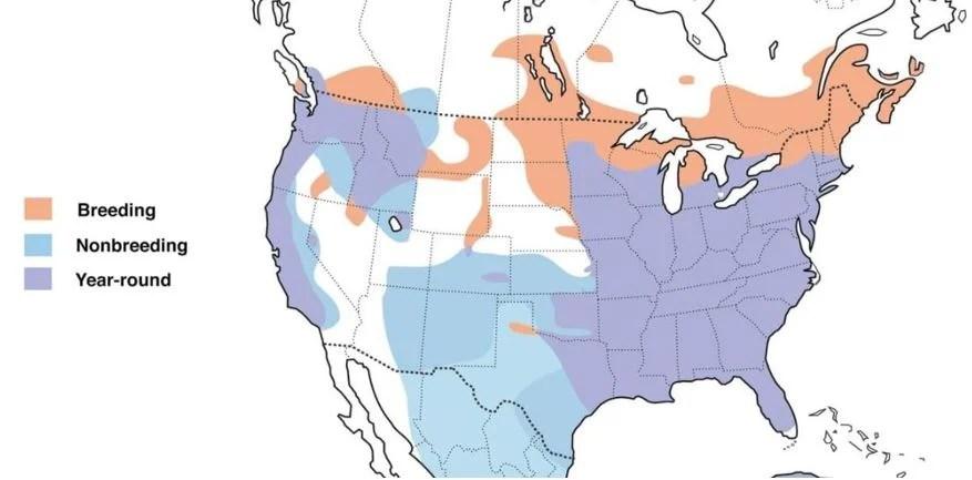 wood duck range map