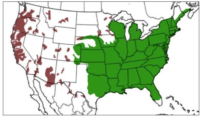american bullfrog range map