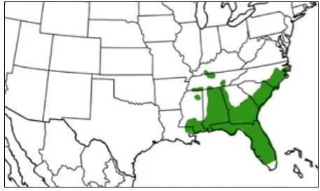 barking tree frog range map