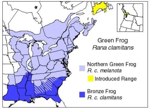 bronze frog range map