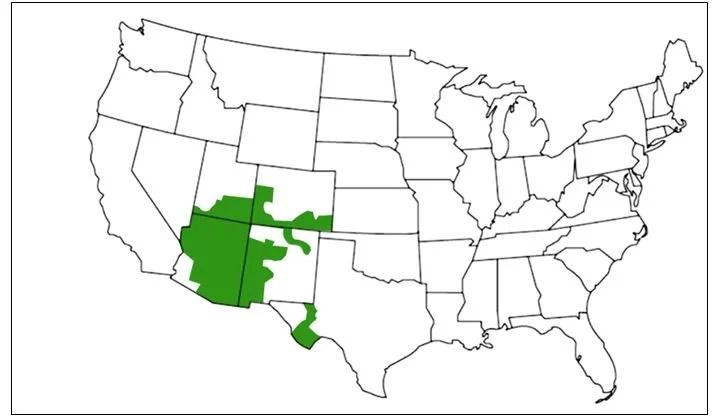 canyon tree frog range map