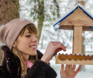 11 Reasons Why Birds Have Stopped Visiting Your Feeders!