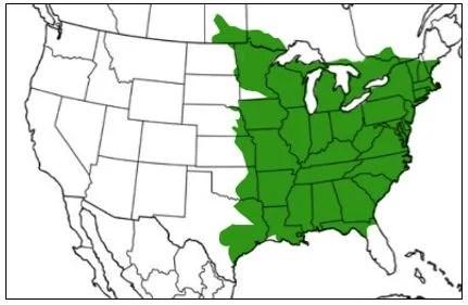gray tree frog range map