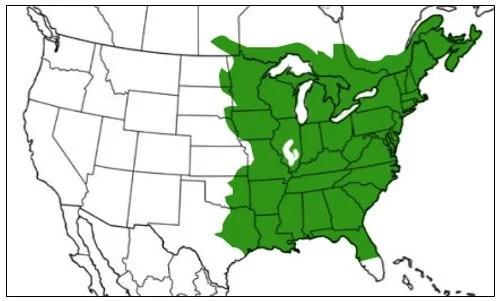 green frog range map