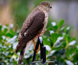 3 ways to keep hawks AWAY from bird feeders! (2021)