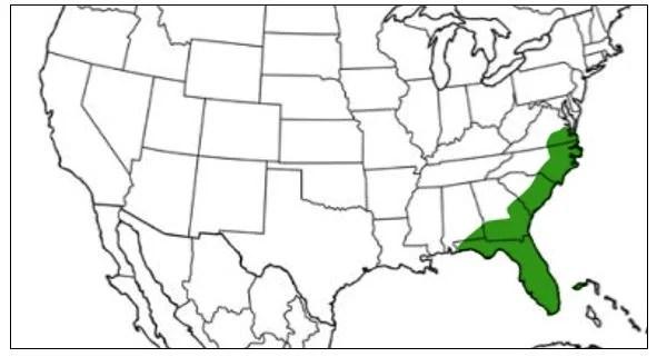 little green grass frog range map