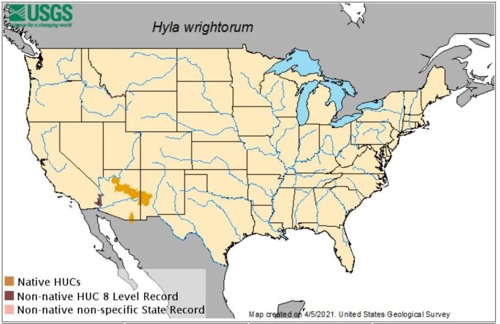 mountain tree frog range map - arizona tree frog