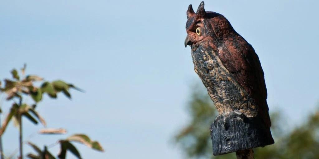 dont use owl decoys to keep hawks away from bird feeders