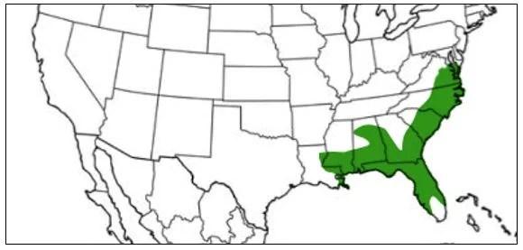pine woods tree frog range map