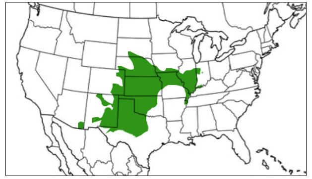 plains leopard frog range map