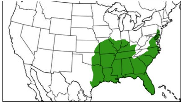 southern leopard frog range map