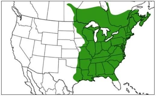 spring peeper range map