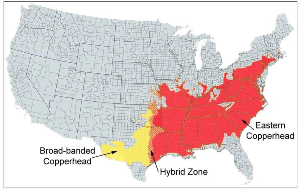 copperhead range map