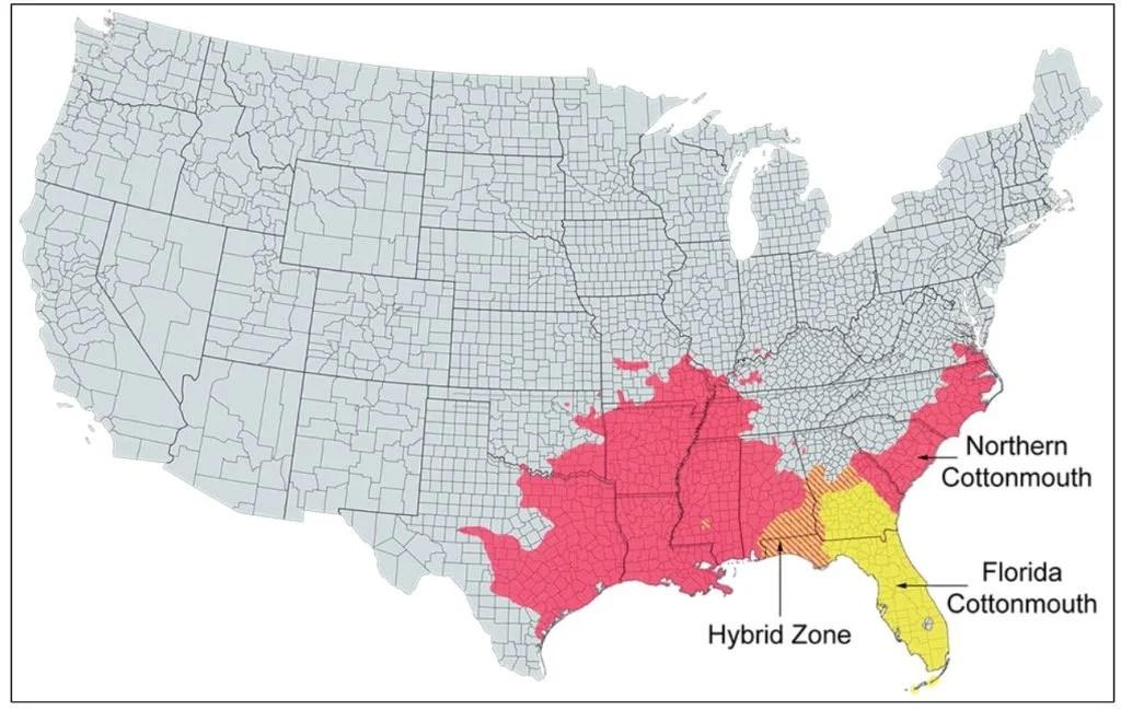 cottonmouth range map