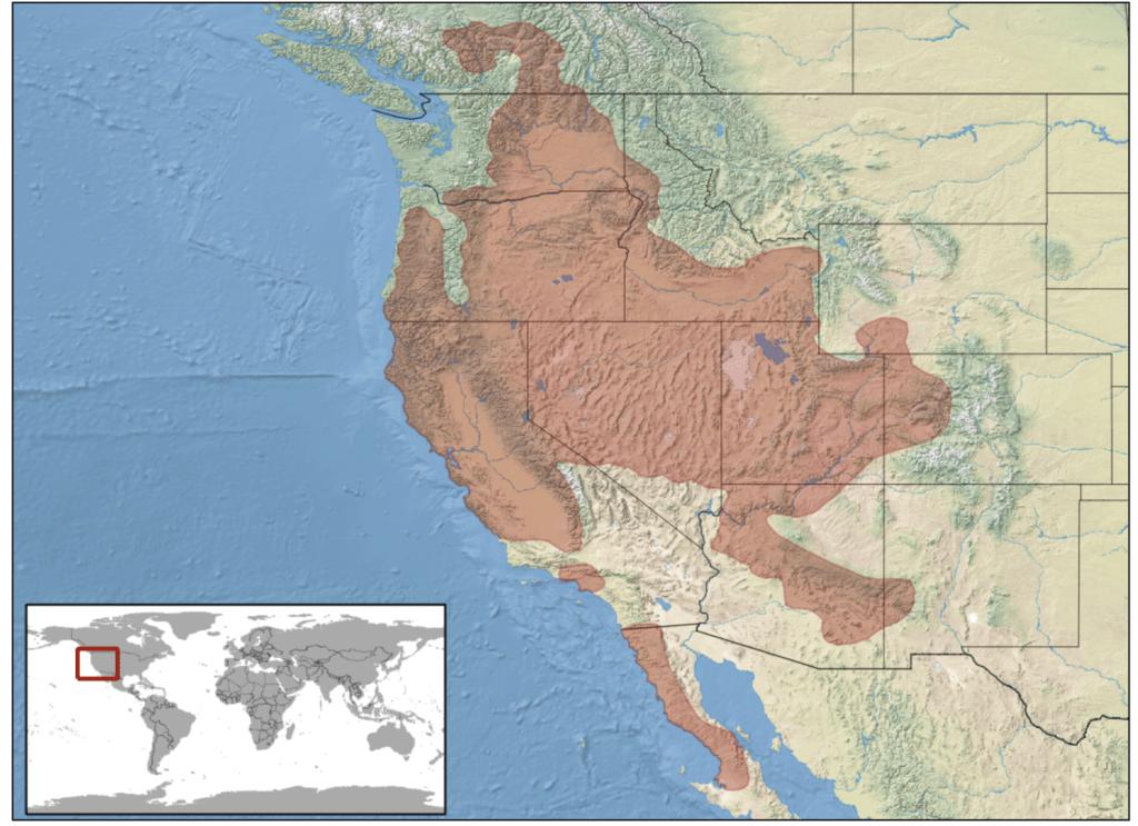 western rattlesnake range map