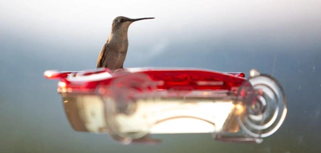 best hummingbird feeders on windows