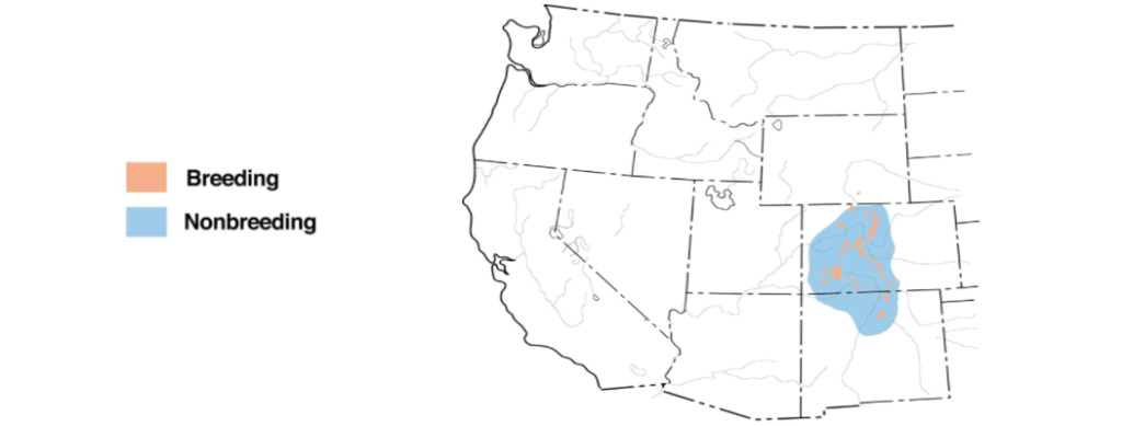 brown-capped rosy-finch range map