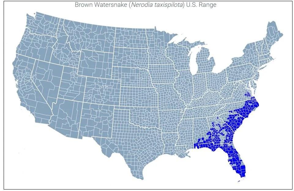 brown watersnake range map