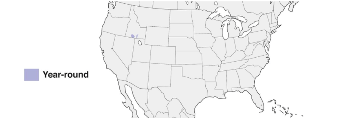 cassia crossbill range map