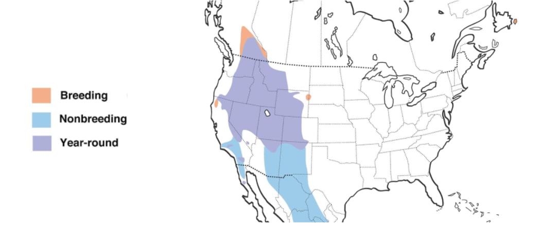 cassins finch range map