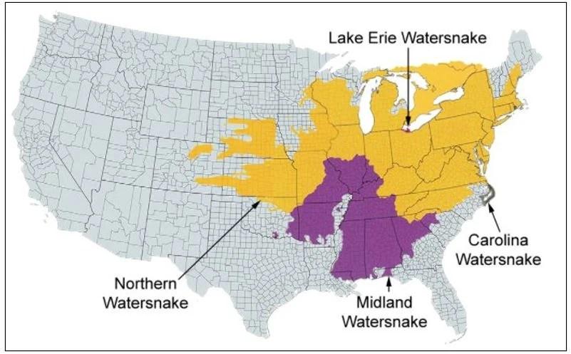 common watersnake range map