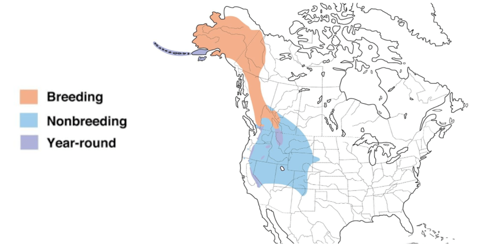 gray crowned rosy finch range map