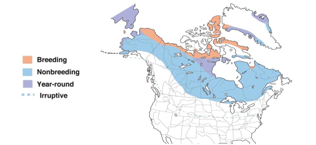 hoary redpoll range map