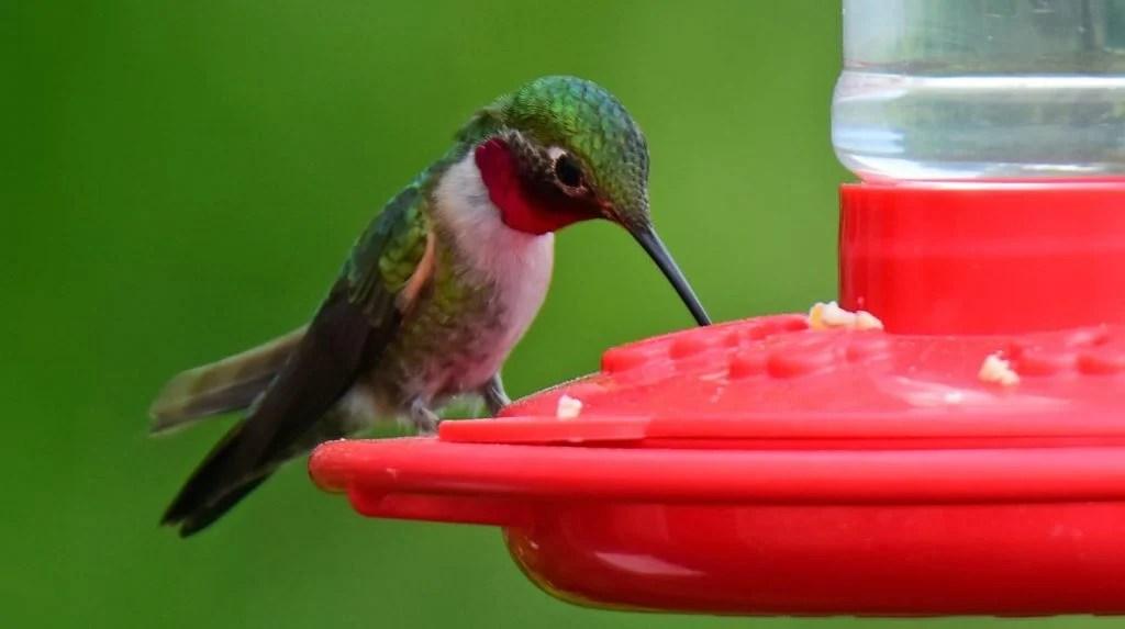 best window hummingbird feeders