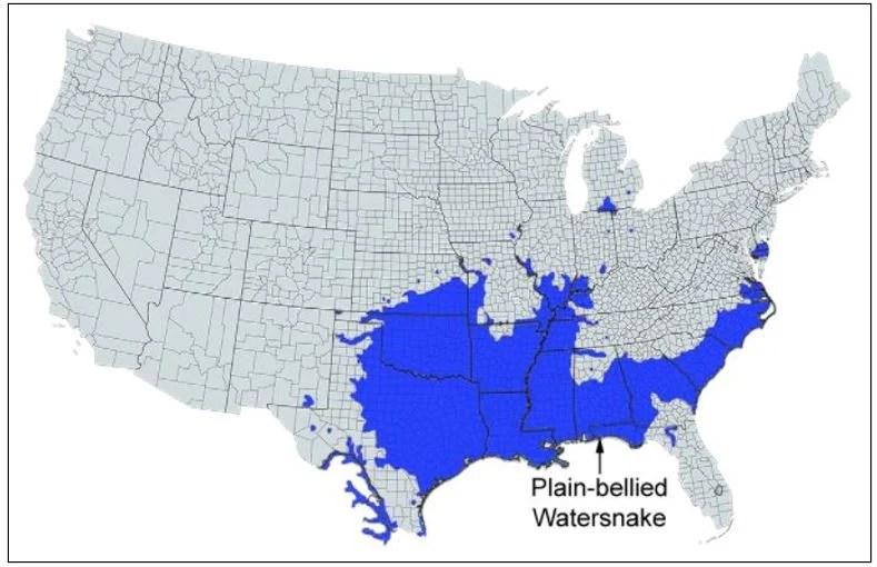 plain bellied watersnake range map