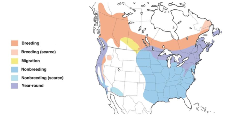 purple finch range map