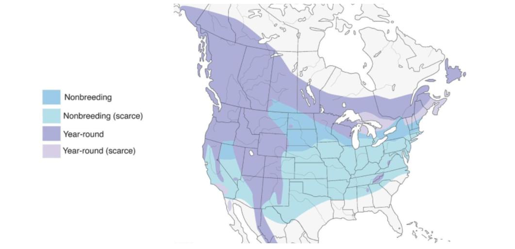 red crossbill range map