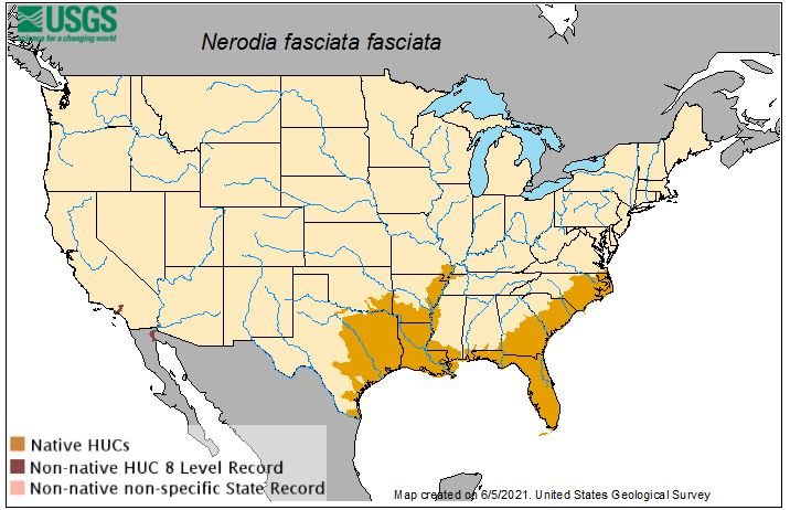 southern or banded watersnake range map
