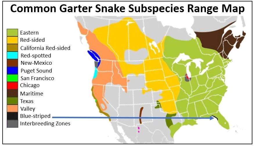 blue striped garter snake range map