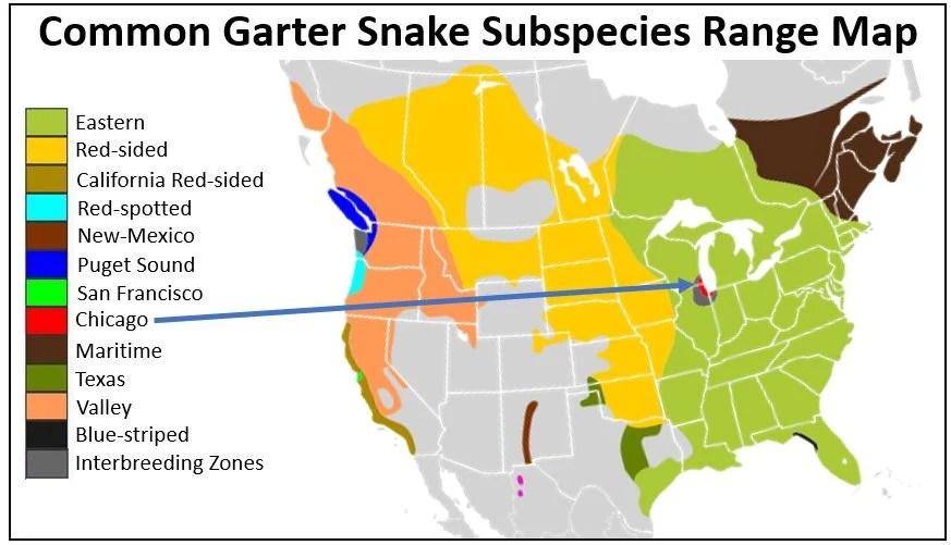 chicago garter snake range map
