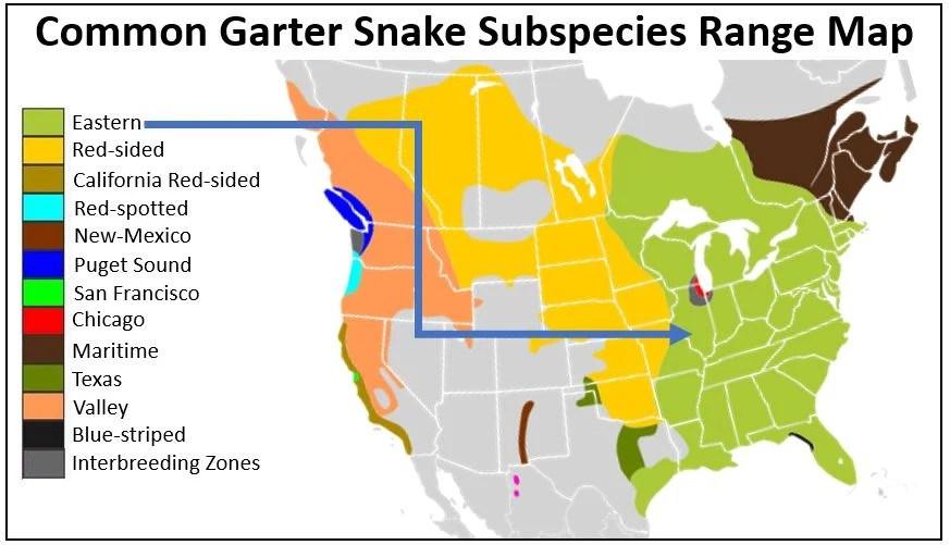 eastern garter snake range map