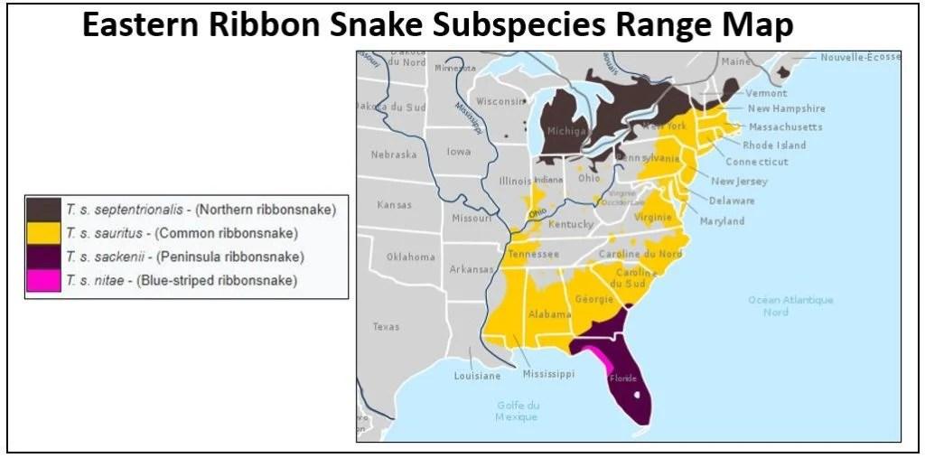 eastern ribbon snake range map