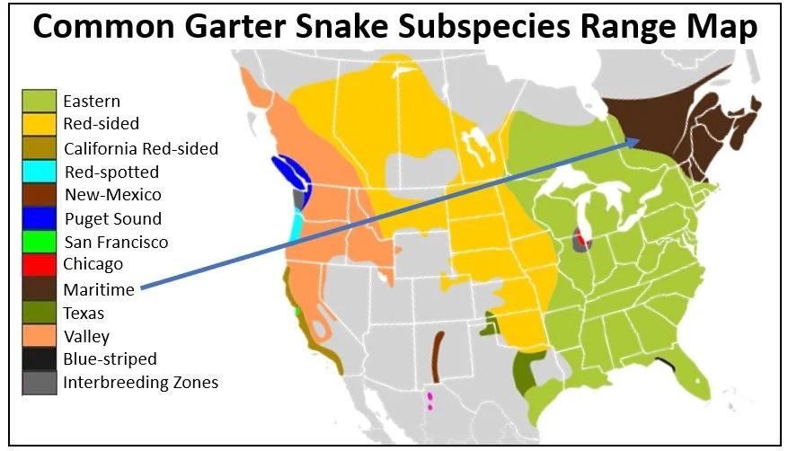 maritime garter snake range map