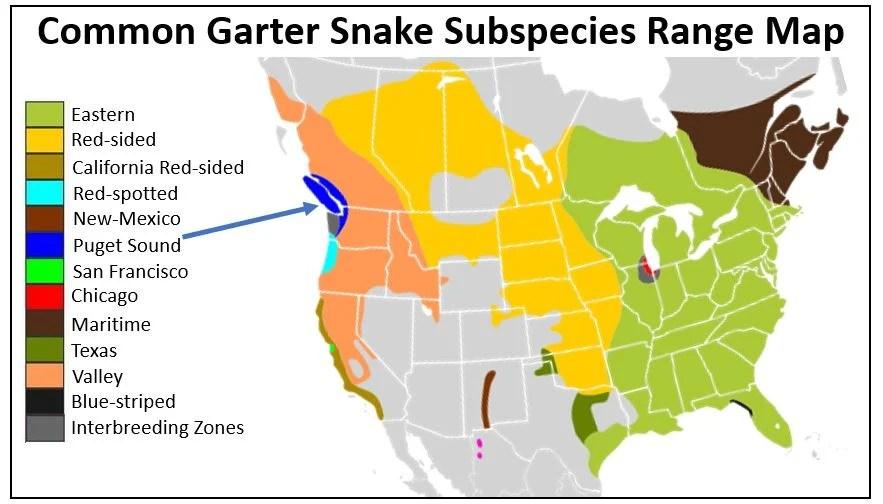 puget sound garter snake range map