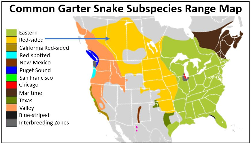 red-sided garter snake range map