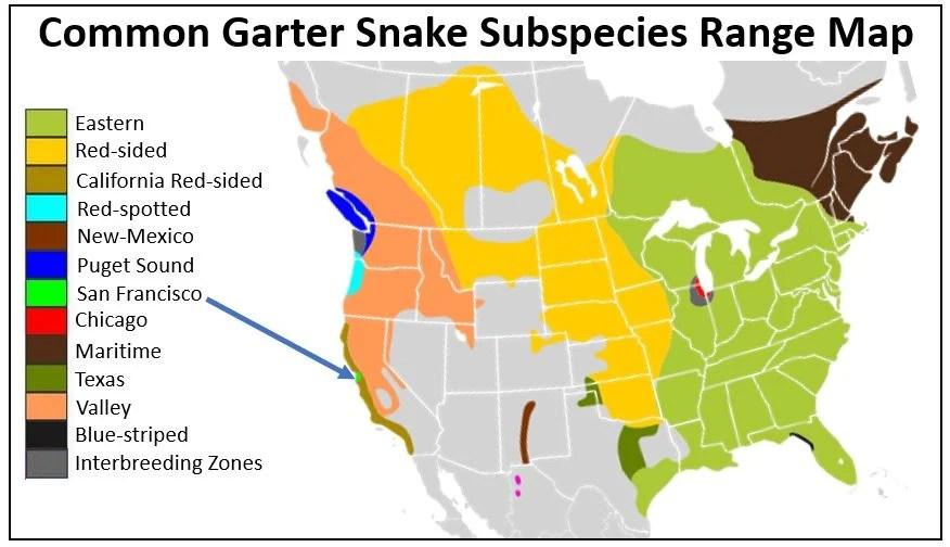 san francisco garter snake range map