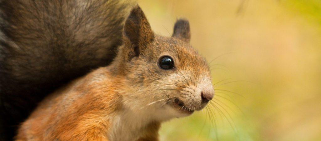 hot pepper bird seed keeps squirrels away