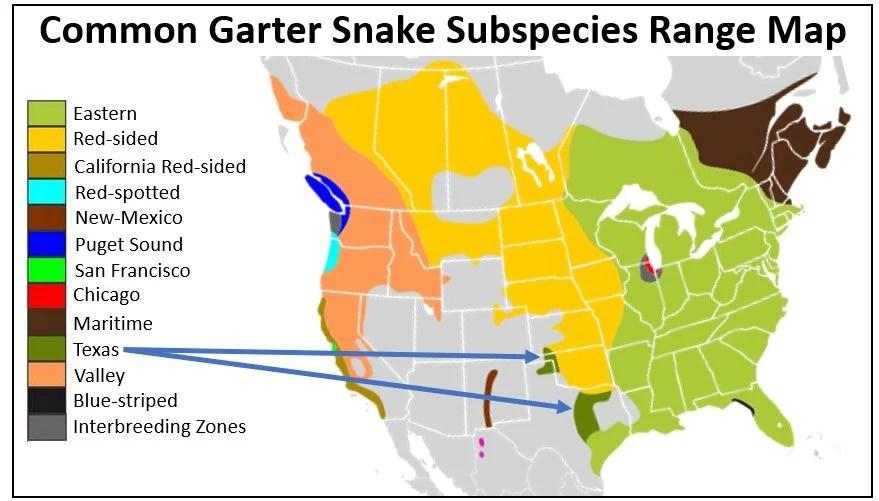 texas garter snake range map