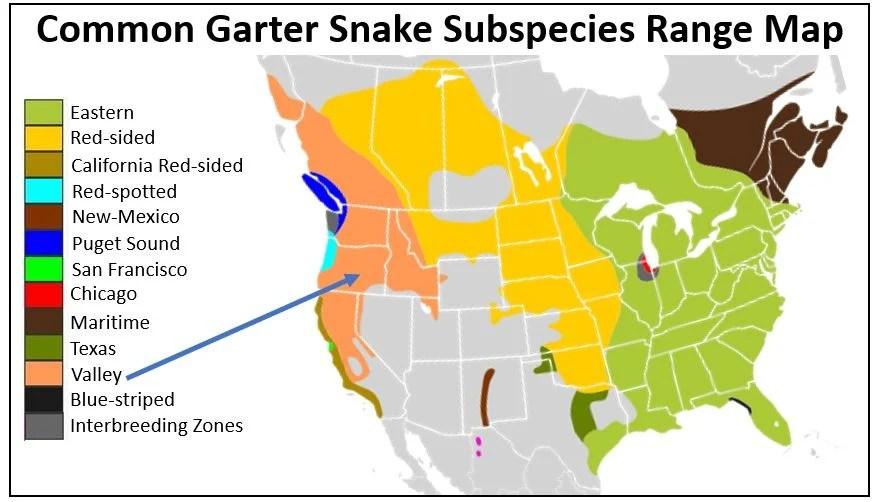 valley garter snake range map