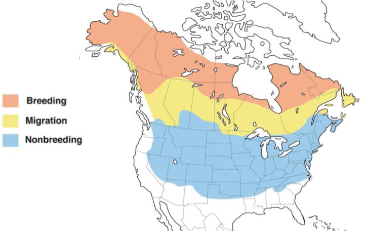 american tree sparrow range map