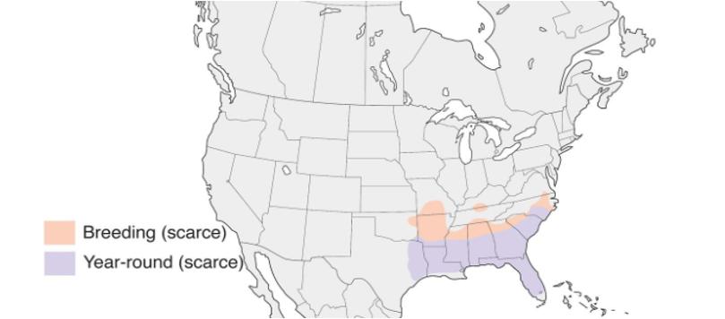 bachman's sparrow range map