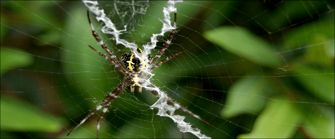 black and yellow spider web zigzag