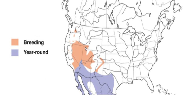 black throated sparrow range map