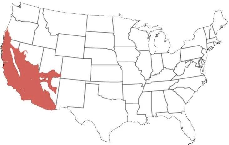 california kingsnake range map